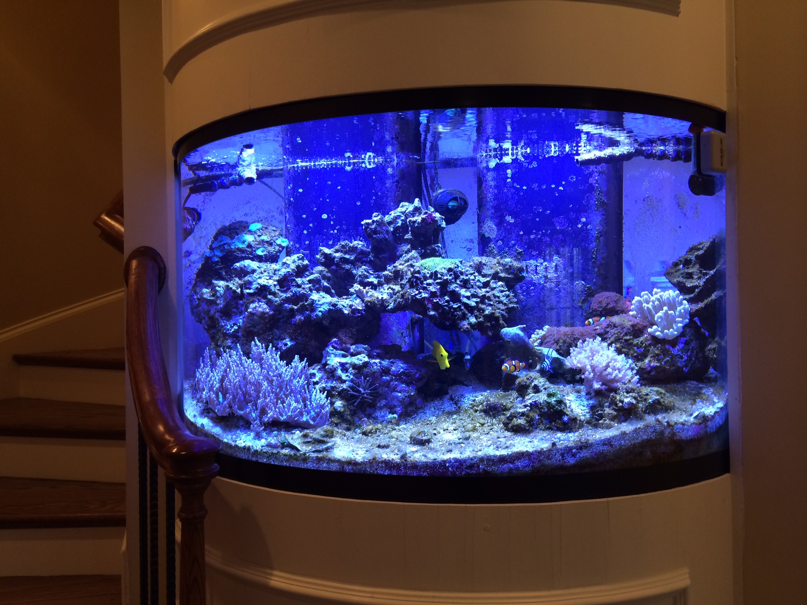 Home saltwater fish tank for Saltwater fish tank