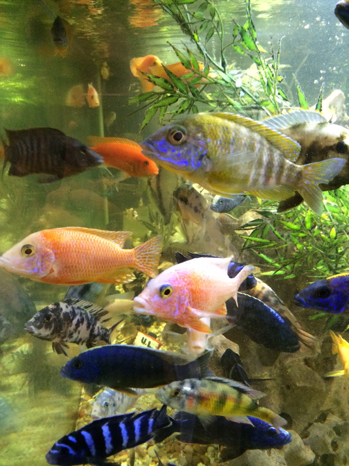 Fish tank care and maintenance louisville ky 2017 fish for Fresh water tank cleaning fish